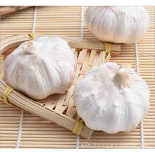 2020 market fresh garlic price