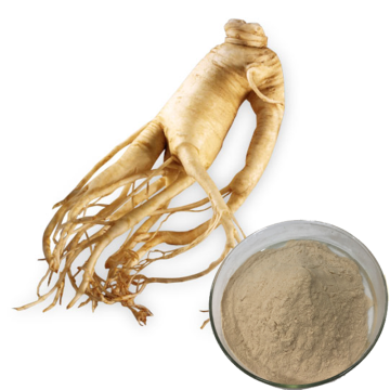 Natural Herbal Ginsenoside Powder Panax Ginseng Root Extract