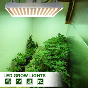1000 watt led grow