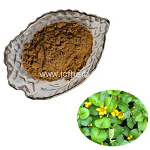 Lysimachia christinae Hance desmodium extract powder