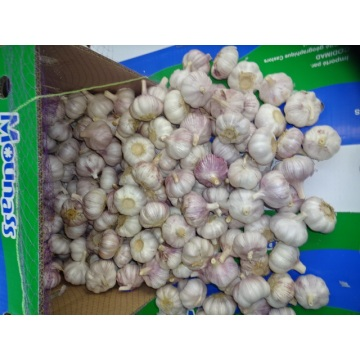 2020 New Season Normal White Garlic