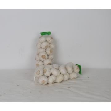 Top Quality Pure Normal Prepacked Garlic
