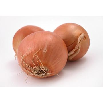 high quality yellow onion from jinxiang