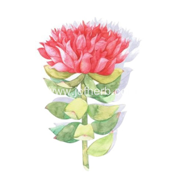 100% Water Soluble Salidroside/rhodiola Rosea Extract