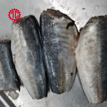Canned Mackerel Fish in Oil Export And Import