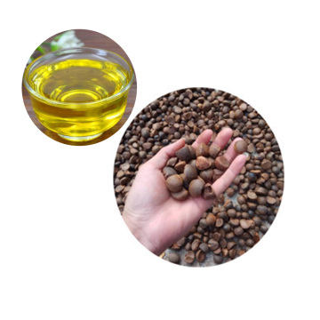 Organic camellia seed oil bulk price cooking massage