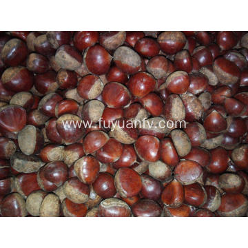 High Quality Chinese Harvesting Fresh Chestnut fruit