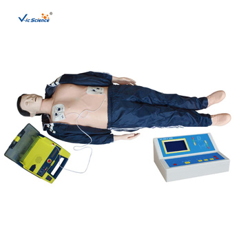 Basic Life Support BLS Manikin