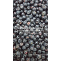 Whole Blueberry Freeze Dryer