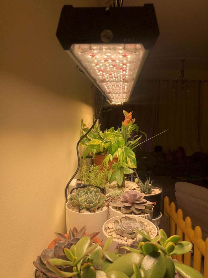 Cactus Grow Light Sunlike Full Specturm Growing Lamp