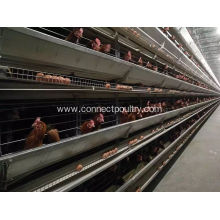 Layer cage of chicken house