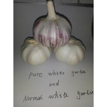 Chinese Fresh and high-quality white garlic