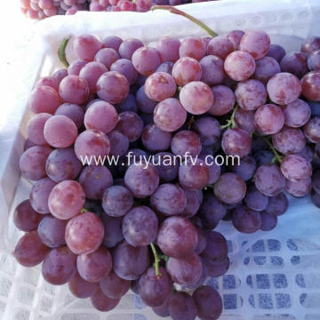 Red globe grape new crop purple skin