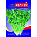 Large leaf heat resistant coriander seeds price