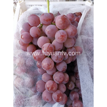 2019 year new crop grape