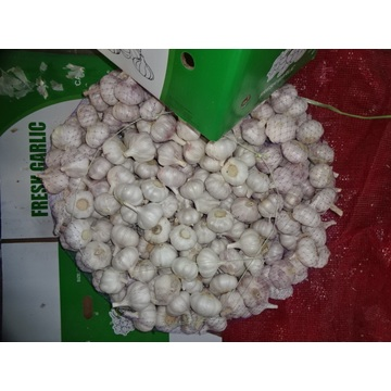 2020 High Quality Normal White Garlic