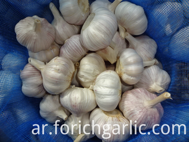 2019 Jinxiang Fresh Normal Garlic
