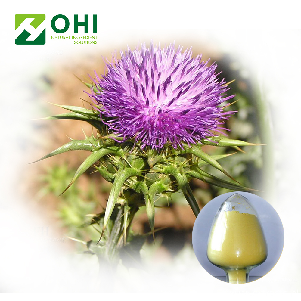 Milk Thistle Seed Extract Silybum Marianum