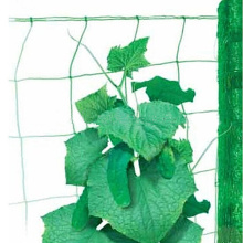 Climbing Plant Support Netting