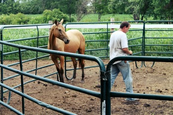 Horse Farm Popular Steel Carral Fence
