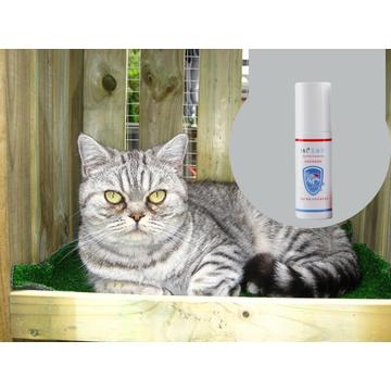 Medical Grade Cattery Disinfectant