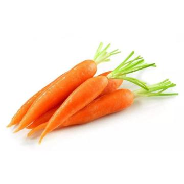 Good Quality Selected Fresh Carrot