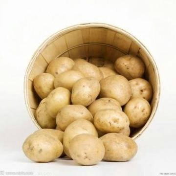 selected quality chinese fresh potato