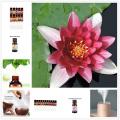 10ml*1pcs Pure Essential Oils for Aromatherapy Diffusers Sunflower Lemongrass Orange Camellia Rose Oil Home Car Air Care