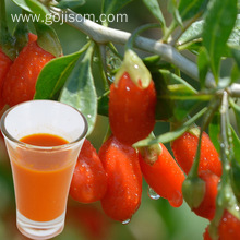 Organic Low-Fat Certified Quality Wolfberry Juice