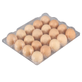 Empty Tray Clear Blister Chicken Egg Box