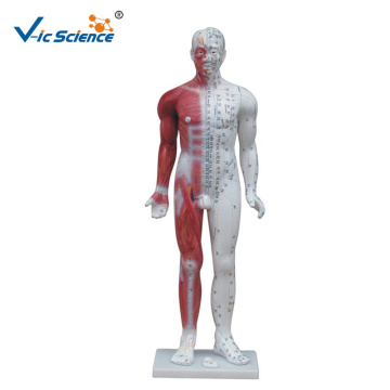 84CM Deluxe Human Acupuncture Model