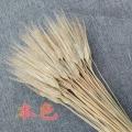 yuans damai
