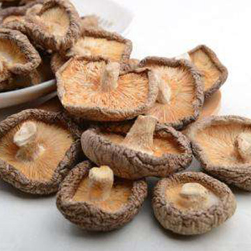 Best Dried Champignon For Health