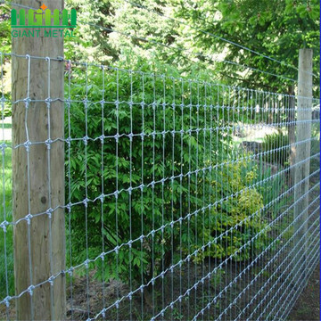 mesh protection forest