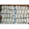 jinxiang pure white garlic with Global gap certificate