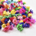 200PCS Dried Flower Head Daizy Glass Cover Nail Art Filling Epoxy Hand Craft DIY