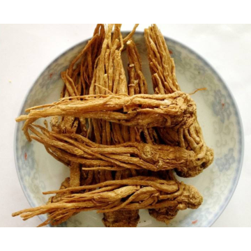 Angelica root essential oil for women