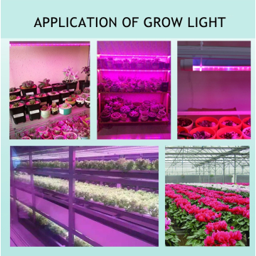 24w T8 led lamp grow light straight tube