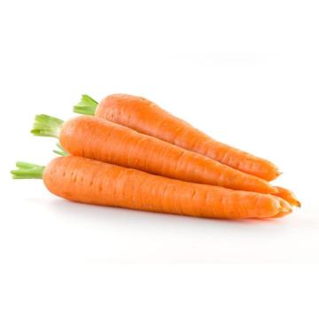 fresh carrot for mid east