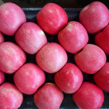 Fresh Pink lady Color Apple