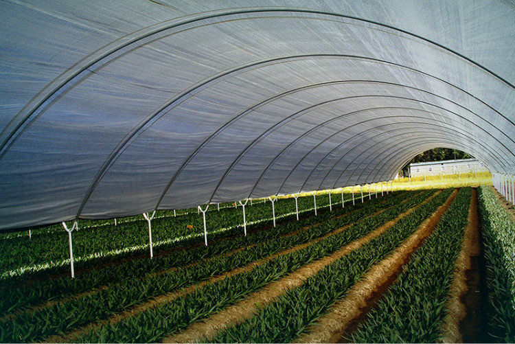 Complete Plastic film Greenhouse