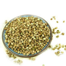 High Quality Organical Hemp Seed With Different Size