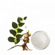 Polygonum cuspidatum extract resveratrol 98% white powder