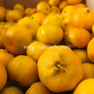 Baby mandarin oranges are directly from factory