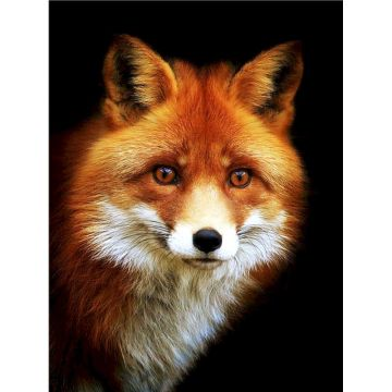 Gatyztory 60x75cm Frame Fox DIY Painting By Numbers Handpainted Animal Oil Painting Modern Home Art Canvas Colouring