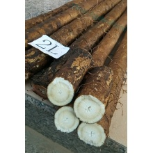 High Quality New Crop Fresh Vegetables Burdock