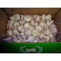 Good Quality Normal White Garlic 2020