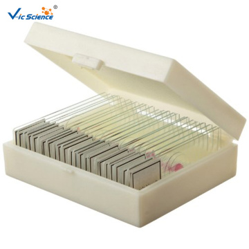 25 PCS Prepared Biological Slides
