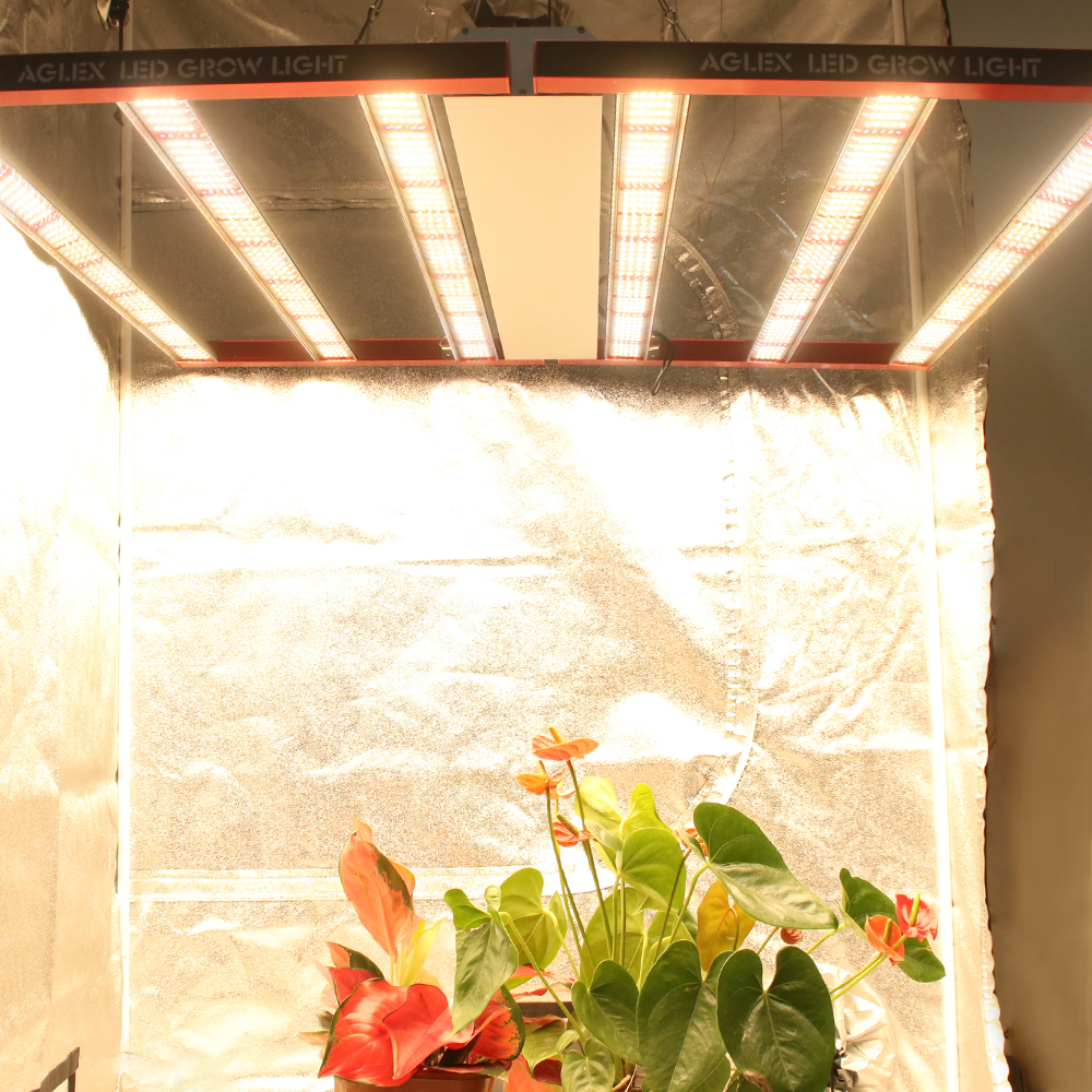 led grow light for medical plant