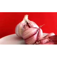 pure fresh normal white garlic